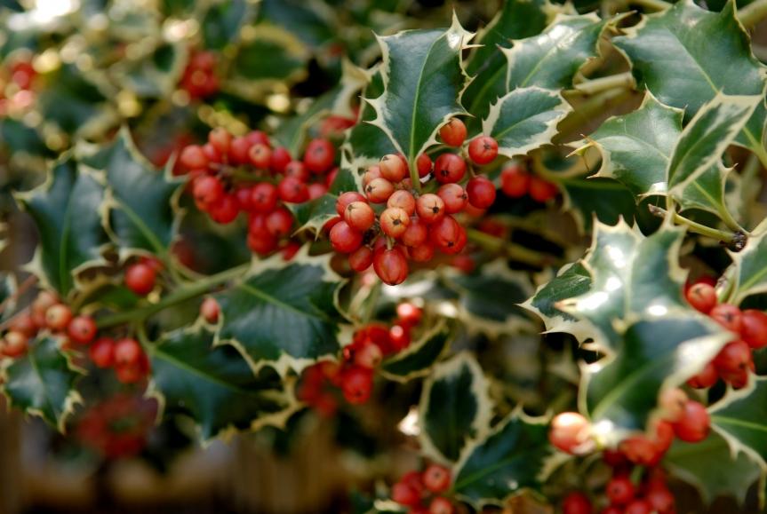 Zimní a vánoční čas